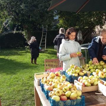cueillettes pommes 2017-2